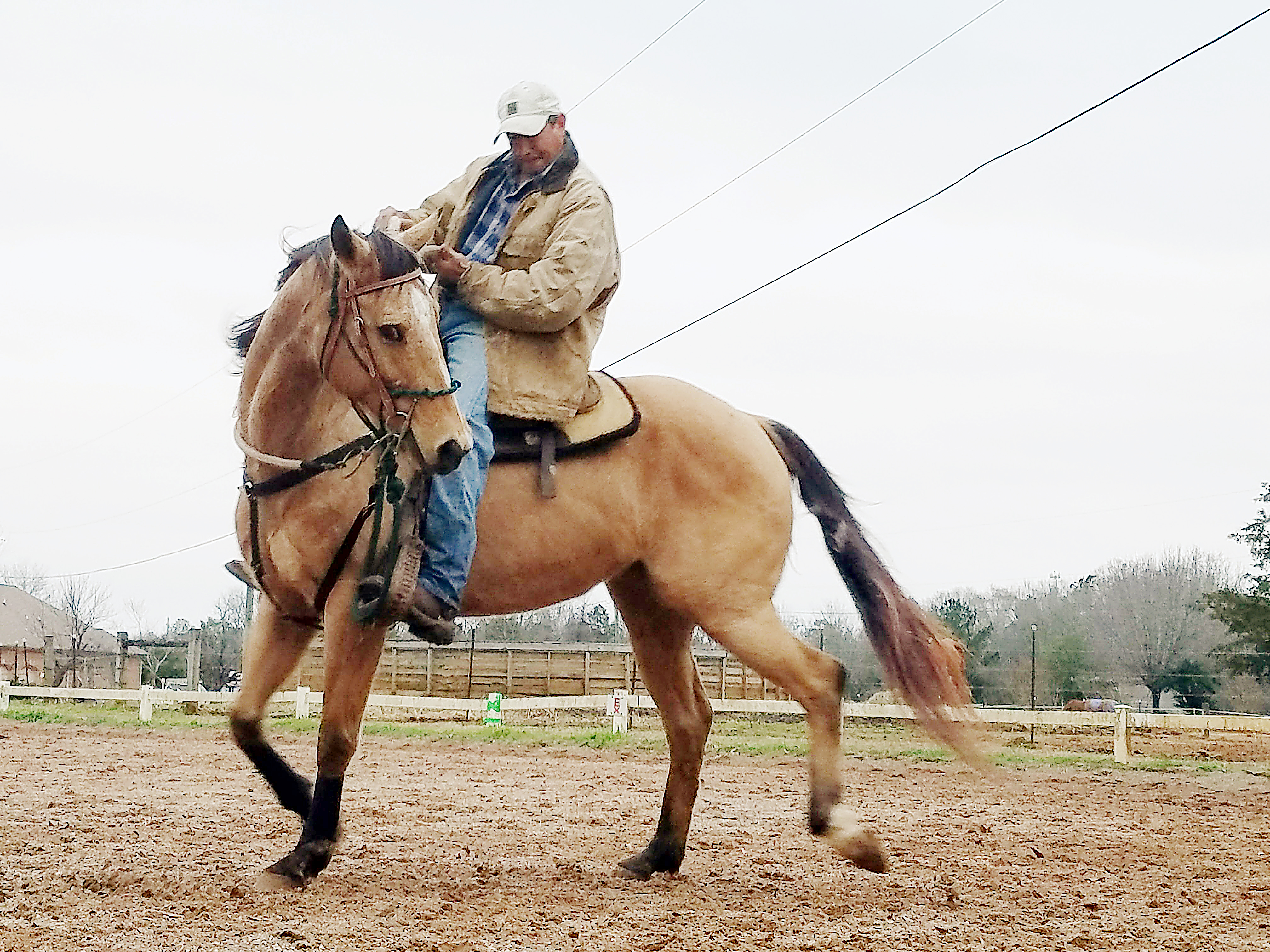 Horse Training and Boarding